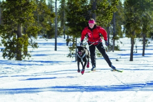 Ruffwear Skijouring